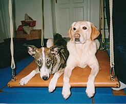 Tiergestützte Therapie