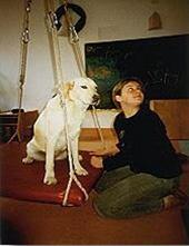 Therapie mit Hund - Komplexe Aktion